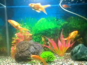 Pet Aquarium Fish