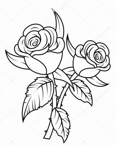 Rose Clipart Roses Coloring Flowers Drawings Pencil