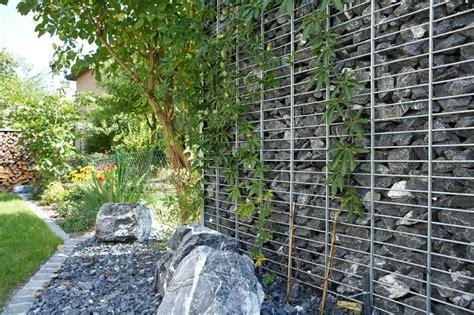 winterharte graser garten hohe pflanzen als sichtschutz pflanzen als sichtschutz