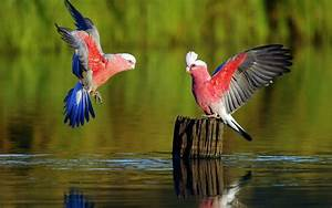 Most Beautiful Parrot HD Wallpapers