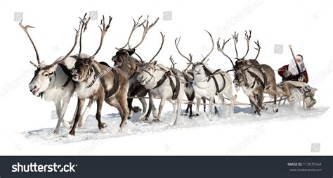 santa claus rides in a reindeer sleigh he hastens to give
