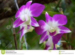 White and Purple Orchid Flower