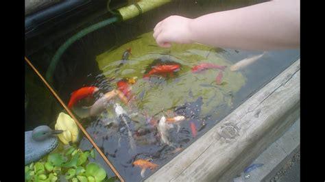 fish pond pics  names types