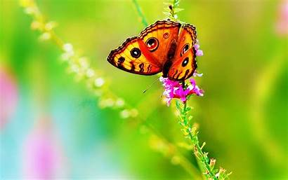 Bright Butterfly Colorful Wallpapers Desktop Flower Abstract