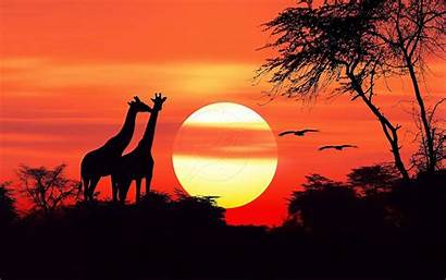 African Sunset Wallpapers Pc Mobile Phones Resolution