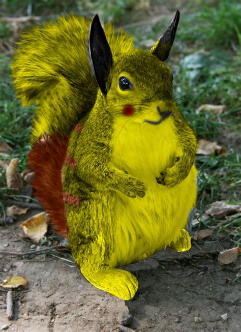 Real Life Pikachu By Djblizard On Deviantart
