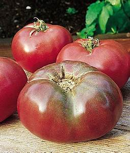 Cherokee Purple Tomato Seeds and Plants, Vegetable ...