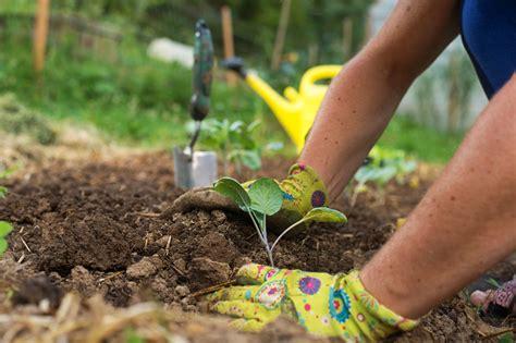 planting a garden fafardstart your vegetable seeds