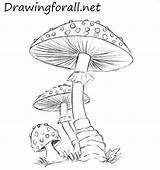 Mushroom Mushrooms Drawing Draw Drawings Pencil Easy Fungi Drawingforall Coloring Tutorial Colored Pages Line Step Pencile Tutorials Lines Grass Tegning sketch template