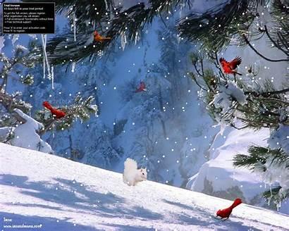 Winter Screensavers Screensaver Thaw Screen Wallpapers Desktop