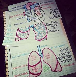 96 Best Images About Heart And Lungs On Pinterest