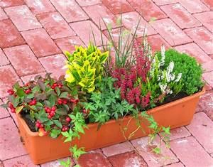Winterharte Blumen Für Kübel : bepflanzter blumenkasten 60 cm wintergr n bunt pflanzen versand f r die besten winterharten ~ A.2002-acura-tl-radio.info Haus und Dekorationen