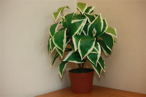 Ukgardens Large Artificial Scindapsus Plant Green Foliage