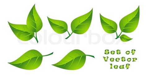 green home plans free set of vector leaf stock vector colourbox