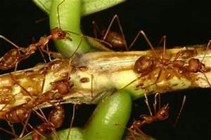 Mittel Gegen Ameisen : nat rliche mittel gegen ameisen so vertreiben sie die kleinen arbeitstiere ~ Buech-reservation.com Haus und Dekorationen