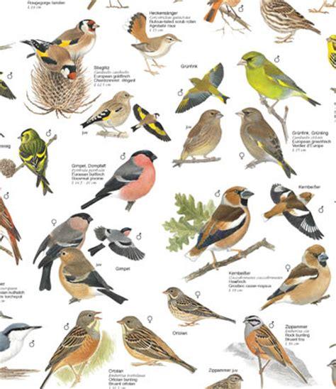 badezimmer auf englisch vogel im garten bilder das beste aus wohndesign und möbel inspiration