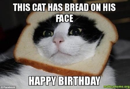 Happy Birthday Meme Cat - funny happy birthday cat meme 2happybirthday
