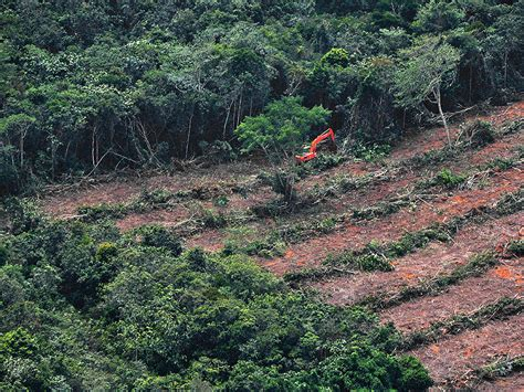 caign monitor templates deforestation ad caign forest 500 identifies companies fighting deforestation
