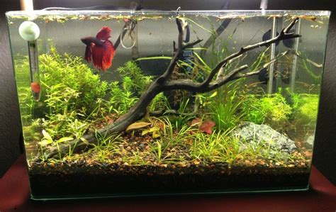 Decor Ideas For Small Kitchen - betta fish tank setup ideas that make a statement spiffy pet products