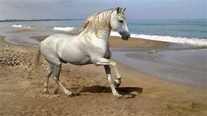 Top 10 Most Beautiful Horse Breeds In The World - EARTH BE ...
