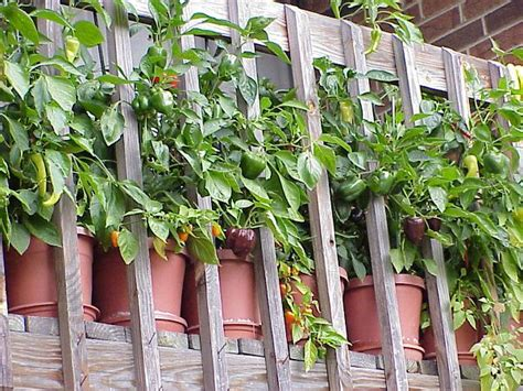 Easy Container Vegetables For Balcony & Rooftop Garden