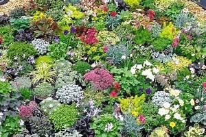 Blumen Für Steingarten : winterharte niedrige stauden steingarten mix mit 20 niedrigen stauden inkl versand ab 29 99 ~ Markanthonyermac.com Haus und Dekorationen