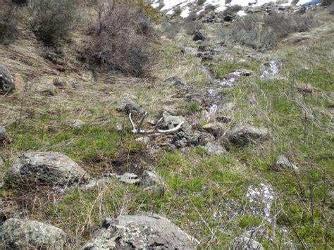 elk shed utah few more damn elk sheds monstermuleys