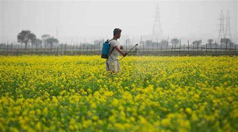 New india assurance company limited2. Centre's crop insurance scheme: Claims worth Rs 5.19 cr yet to be settled, but state figures say ...