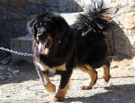 dogs  sentenced    vocal chords removed