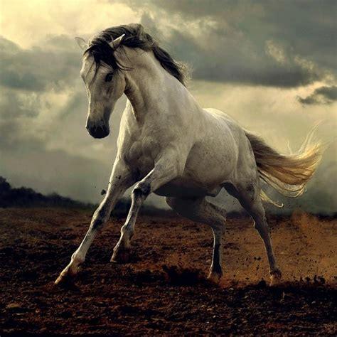 süße pferde bilder sch 246 ne pferde bilder die die gro 223 artigkeit der pferde zeigen archzine net