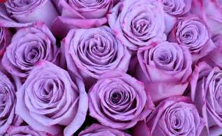 purple and blue flowers free photo roses bouquet mov flowers free image on