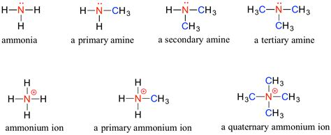 Protonated Amine by 1 2 Functional Groups And Organic Nomenclature