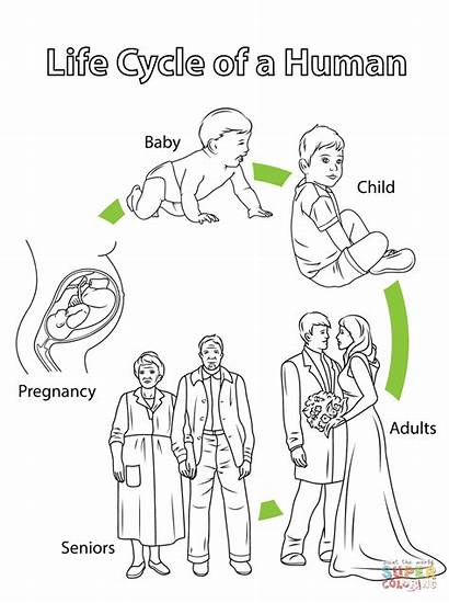 Cycle Human Coloring Pages Biology Printable Cycles