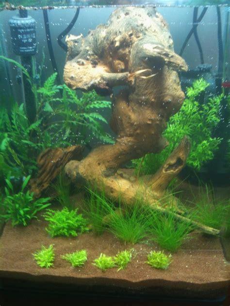 nano aquarium 40 l crevettes