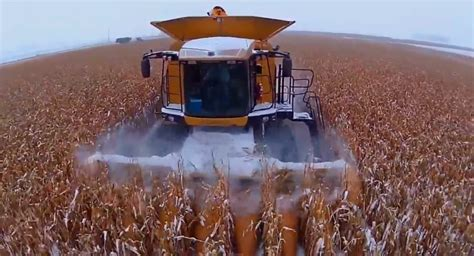 harvesting corn  snow november neil young harvest