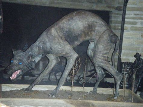 ShukerNature: THE NAKED TRUTH ABOUT HAIRLESS HYAENAS, AND ...