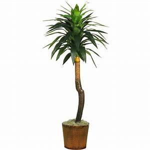 Yucca Palme Blüht : yucca palme schneiden yucca palme vermehren yucca palme ~ Lizthompson.info Haus und Dekorationen