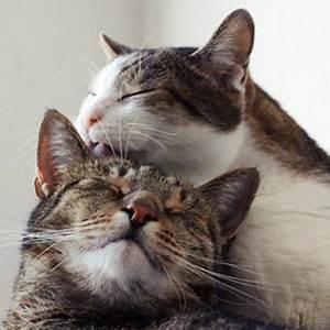 Welche Pflanzen Sind Für Hunde Giftig : der blog f r alle hunde katzenbesitzer tierisch wohnen ~ Watch28wear.com Haus und Dekorationen
