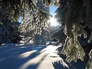 Die Schönsten Gartenbäume : das sind die sch nsten winterbilder ~ Michelbontemps.com Haus und Dekorationen