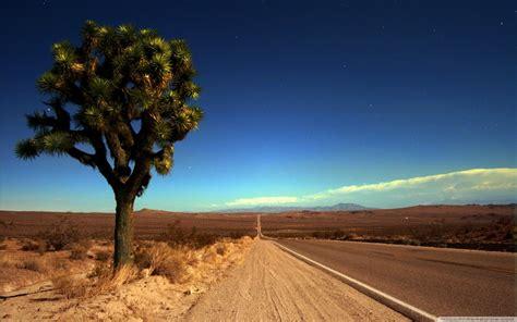 joshua tree highway  hd desktop wallpaper   ultra