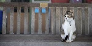Le Bon Coin Oise Bricolage : elle d masque sur le bon coin les voleurs de son chat ~ Dailycaller-alerts.com Idées de Décoration