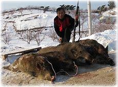 멧돼지 사냥 종학