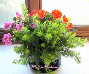 100+ [ Best Indoor Flower Plants ] | 10 Best Indoor Plants ...