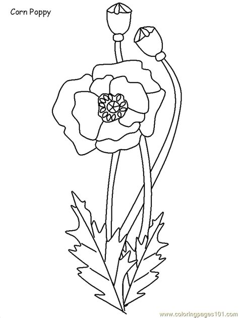 poland coloring page  poland coloring pages coloringpagescom