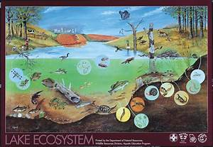 All Types of Ecosystems | ecosystem a community and its ...