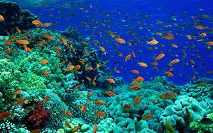 Fish Pictures Ocean Wallpapers Chapter 1 - HD Animal ...