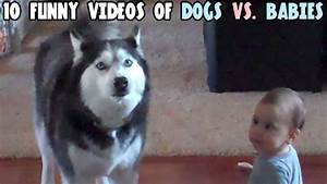 10 funny videos of dogs vs babies