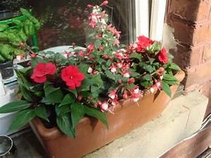 Blumen Für Schatten : welche blumen f r blumenkasten im schatten blumen in ~ Lizthompson.info Haus und Dekorationen