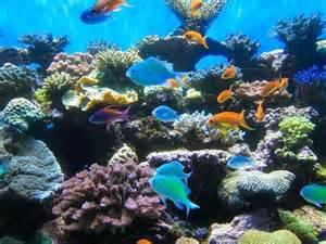photos of kid friendly attraction birch aquarium at scripps san diego california minitime