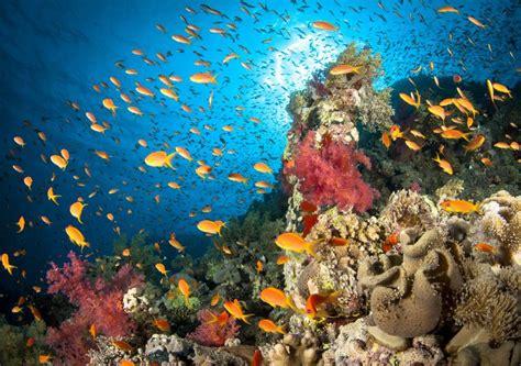 facts   ocean   marine life habitat